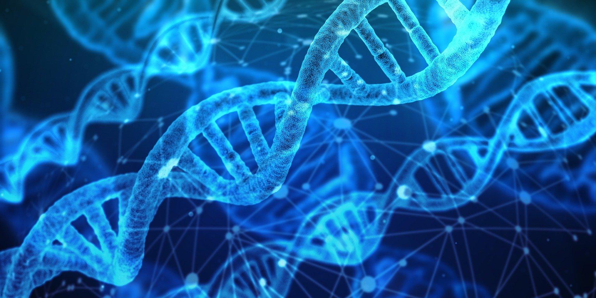¿Genética o aprendizaje?